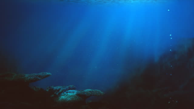 Sea underwater Seamless loop