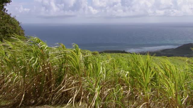 WS PAN Sea view from mountain top  / Brightown, Barbados
