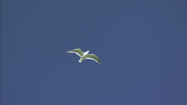 Seabird Flying In The Sky