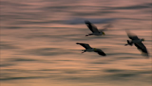 Seabirds fly across the waves at dusk.