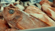 Seafood department with sea fish