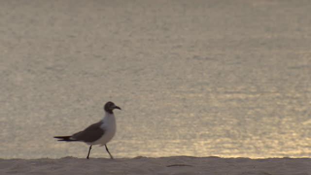 MS Seagull at beach / Brightown, Barbados