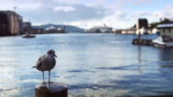 Seagull at the harbor in Bergen