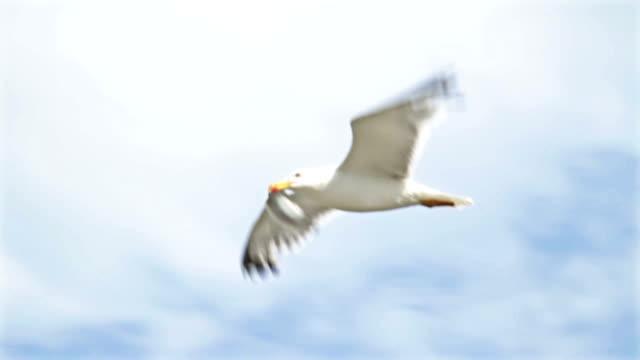 Seagull caught fish