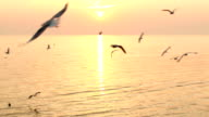 Seagull Fly Near Sea at Sunset