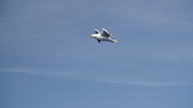 Seagull flying in slow motion