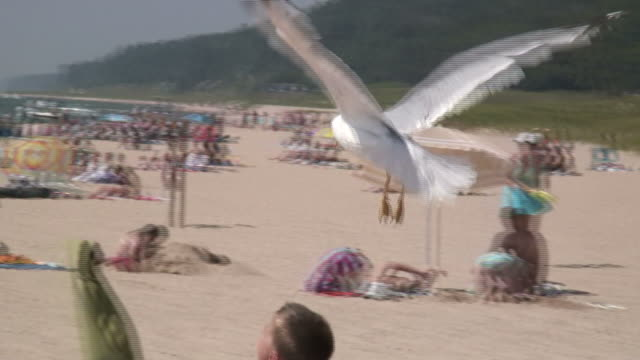 Seagull in flight over the beach - HD 1080/60i