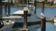 A seagull is perched on a beam of the Marina