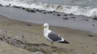 Seagull Perched On The Beach