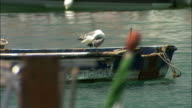 A seagull preens its feathers on a rusty boat in a marina. Available in HD.