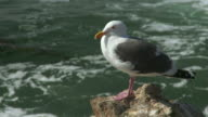 Seagull Sitting on a Rock by the Ocean