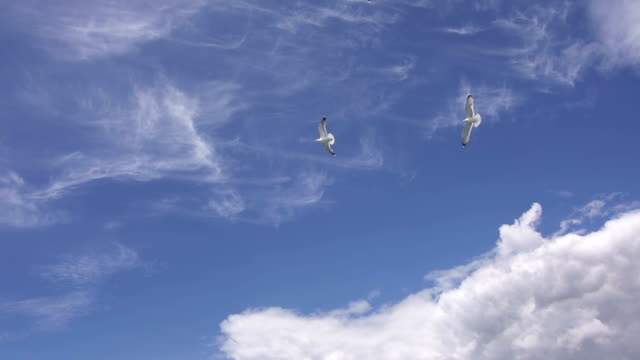 Seagulls flying across the sky