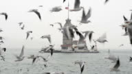 Seagulls flying in front of the Maiden's Tower