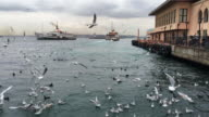 Seagulls flying in Istanbul, Turkey