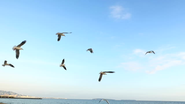 Meeuwen vliegen op strand