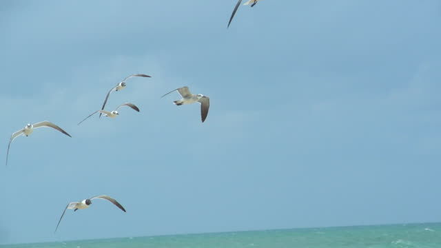 HD SLOW-MOTION: Seagulls Flying On Florida Beach