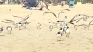 SLOW MOTION HD: Gabbiani volano sulla spiaggia