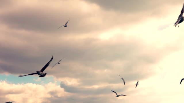 HD: Meeuwen vliegen Slow Motion