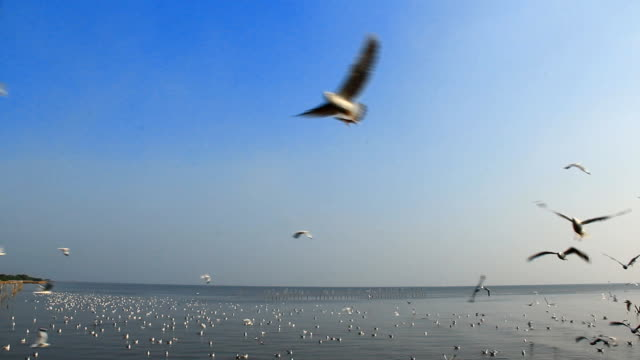 Seagulls in the blue sky