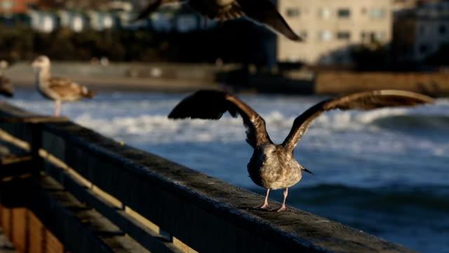 Seagulls on Fishing pier