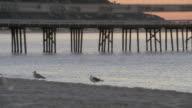 PAN Seagulls on the beach in front of the Santa Monica Pier / Santa Monica, California, United States