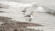 Seagulls Perched on Shore
