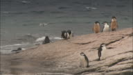 Seals and penguins live on the shoreline of Signy Island.