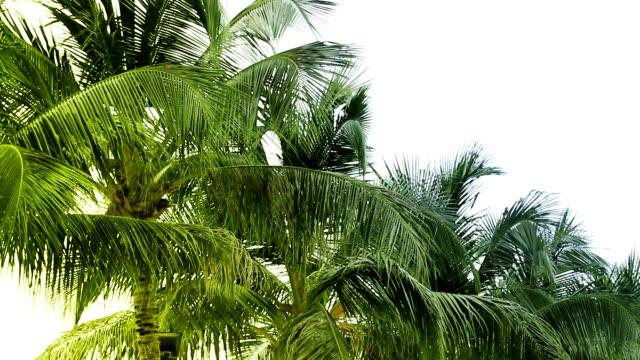 Seamless Loop Palmtrees on a beach