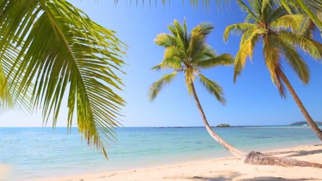 Seascape and palm tree
