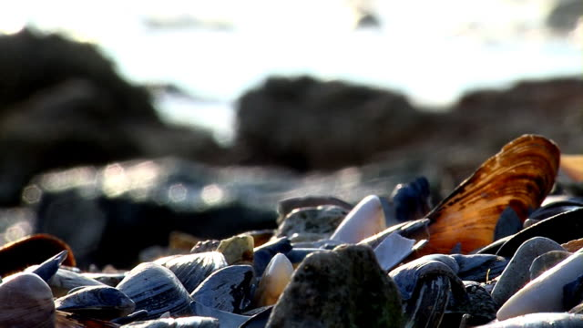 seashells beach