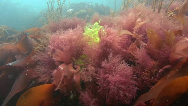Seaweed and Kelp