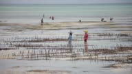 Seaweed farmed on Tanzanian archipelago is one of the Zanzibars key exports for food cosmetics and medicines in Asia Europe and North America but now...
