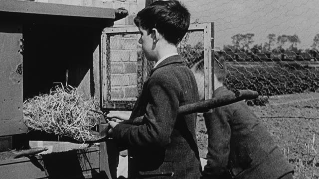 MONTAGE Secondary school students outside tending to rabbits and their cages, and harvesting garden greens during agricultural classes / Yorkshire, United Kingdom