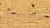 Seedlings on the sand.