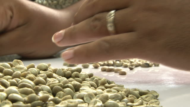Selecting coffee beans for cupping session