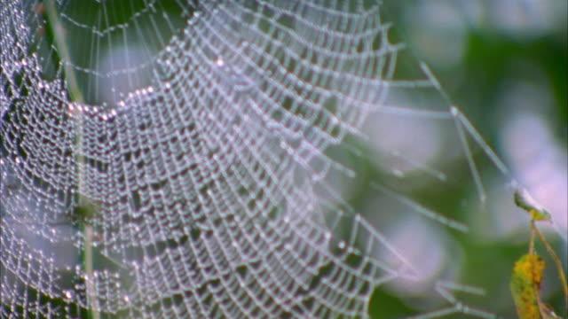 Selective focus close up pan spider web / Satsumasendai, Kagoshima Prefecture, Japan