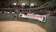 Sellers and buyers attend the one hundred and nineteenth annual autumn sale of pedigree highland cattle on October 10 2016 in Oban Scotland The show...