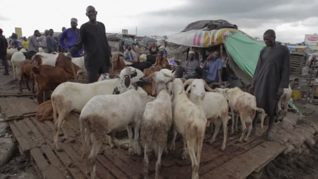 Sellers arrive with rams and goat on sale for the Eid alAdha festival at the market in Kara in the state of Ogun on September 23 2015