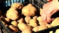 HD: Selling Potato