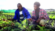 Senior African mentor discusses crops with young apprentice organic farmers