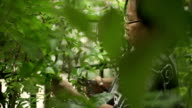 Senior Asian Woman Pruning Leaf of Tree