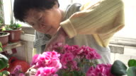 Senior Chinese woman pruning flowers