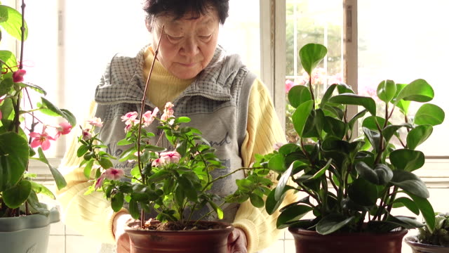 Senior Chinese woman pruning flowers