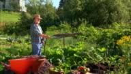 WS PAN Senior farmer watering vegetable garden, Halifax, Nova Scotia, Canada