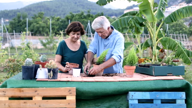 Senior man and woman working together in your garden