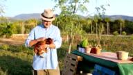 Senior man farmer holding chicken