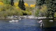 Senior Frau Fliegenfischen in Colorado