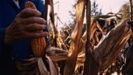 SLO MO Senior Woman Harvesting Corn