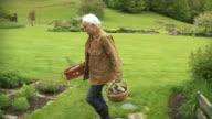 MS ZI Senior woman working in garden / Stowe, Vermont, USA