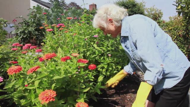 MS Senior woman working in her garden / Portland, Oregon, USA